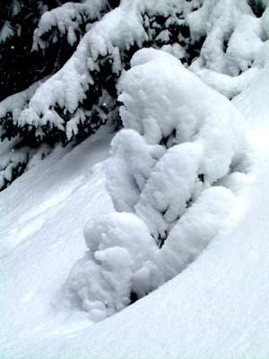 Kleiner Schneebär