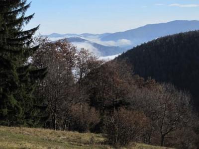 Almwiese nordöstlich vom Hochstaff