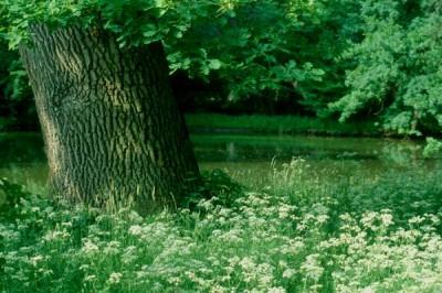 Lednice - Baumriesen, Blumenwiesen, Teiche und malerische Kanäle