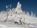 BB Baumgestalten vor Himmelsblau WEB RSCN2939