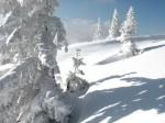 BB Eisbäume im Schneetreiben WEB DSCN2886