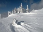 BB Voralpine Arktis am Tirolerkogel WEB DSCN2876