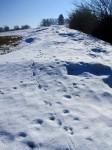 Die vorläufig letzten Schneewächten?