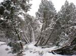 Evelines Winterbilder Spirkenwald Altmelon WEB DSCN6565