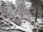 Evelines Winterbilder Spirkenwald Altmelon WEB DSCN6566