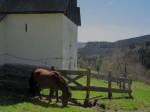 BB Ponny und Leonhardkirche WEB IMG_4516