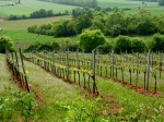 Weingärten an der Reden