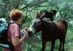 Zutraulicher Esel vor dem Portraibild