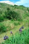 Talgrund bei Draga Bascanska