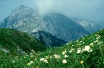 BB Crna prst blühende Bergwiesen WEB Scan1278