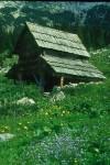 BB d Planini v Lazu Almstall WEB Scan1305