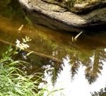 AB Kampwasser mit Spiegelung WEB DSCN3587