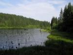 Bucherser Teich