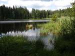 Waldteich bei Karlstift
