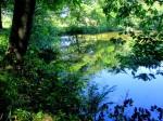 BB Spiegelung beim Teichufer Zofinka WEB IMG_5154