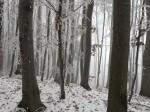 AB Buchenwald WEB DSCN4515
