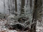 AB Bunt gemischter Waldbestand im Raureif WEB DSCN4522