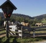 BB Haflinger am Zaun mit Wegkreuz WEB P9647