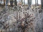 BB Raureif am Waldrand beim Reidl WEB IMG_6151