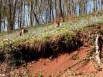 AB Vulkanboden und Immergrünwald im Muschkagraben