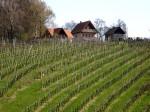 BB Weingärten am Sendl