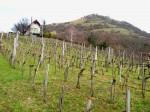 AB Weingärten unter dem Csobanc