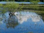 AB Überschwemmte Verlandungszone