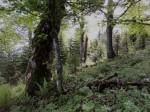 Urwüchsiger Wald am Nordwestkamm