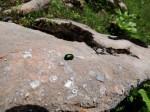 BB Jurakalk mit Fossilspuren