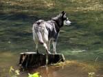 BB Ein Böser Wolf?