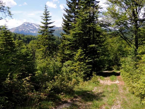 BB Oberer Forstweg mit Dürrenstein