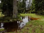 BB Waldmoortümpel zwischen Brach und Breimauer