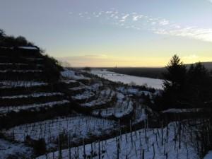 Weingärten und Donau