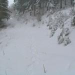 Meine Schneeschuh-Spuren