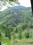 Felsen und Wald im Adlitzgraben