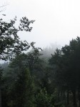 Der Sender auf dem Muckenkogel - versteckt im Nebel