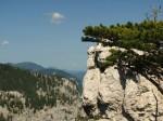 Blick zum Obersberg und ganz hinten zum Türnitzer Höger