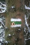 Der Baum mit dem Spechtloch
