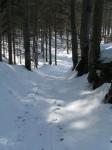 Am Wanderweg im Wald