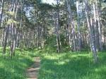 Schön ist es im Föhrenwald