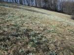 Die Schneeglöckerl-Wiese hinter der Hütte