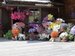 Wunderbarer Blumenschmuck vor der Almhütte