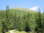 Gummaberg (im Wald versteckt sich die Wildbachhütte)