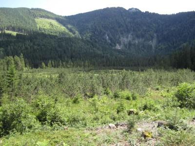 Blick übers Hochmoor