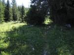 Auf dem Almweg zur Brunnsteinalm