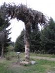 Brünndlweg-Palme