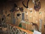 Im kleinsten Jagd- und Wildtiermuseum im größten Hochsitz Europas