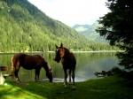 Haflingerfamilie am Etrachsee